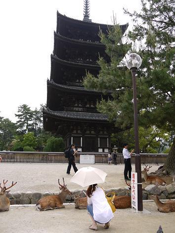 興福寺五重塔6.3