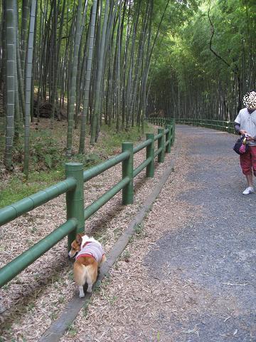 竹林のお散歩9.25