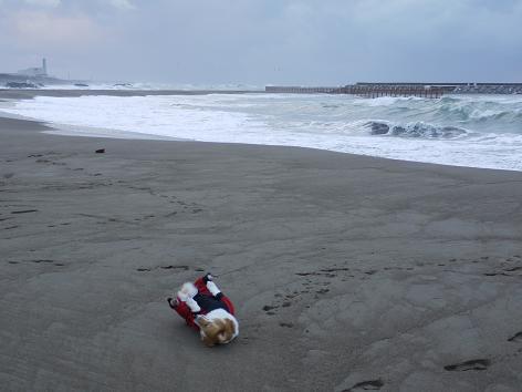 日本海海岸でウリウリ11.20
