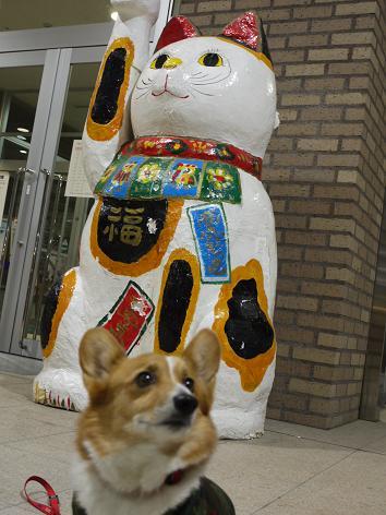 ネコと犬12.13