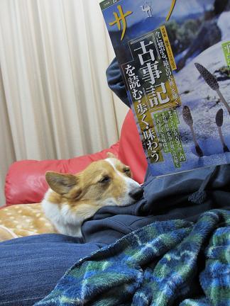 サライを読む