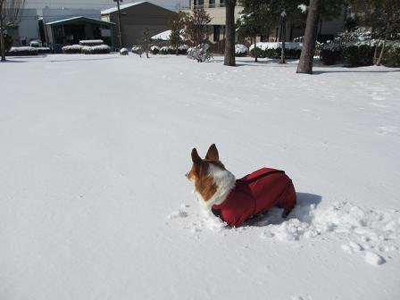 新雪2.2