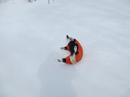 雪でもウリウリ3.25