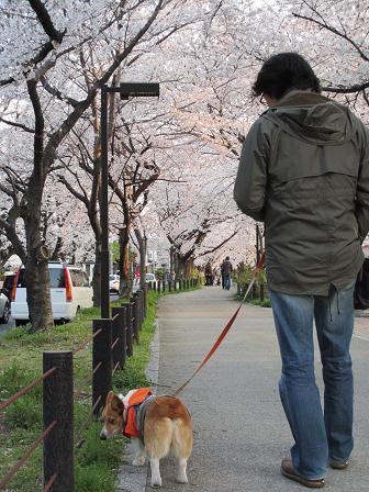 夕方のお散歩4.8