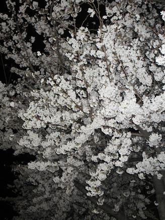 夜桜4.9