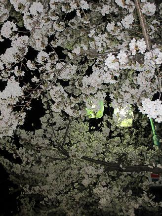 街頭と夜桜4.9