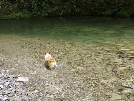 川に入る7.8