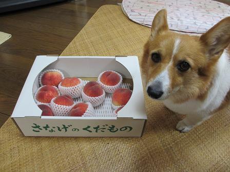 桃とプーちゃん