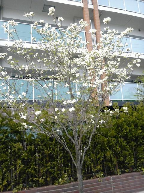 マンション桜