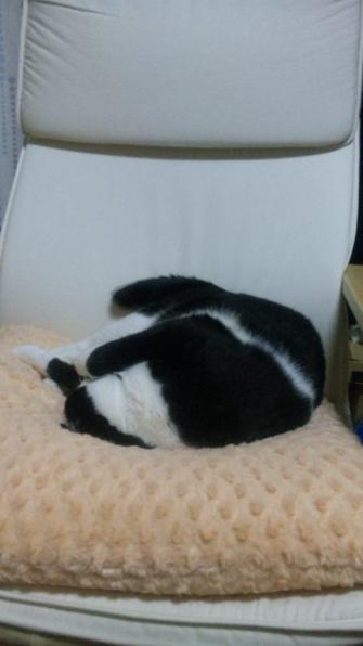 本日もイスで寝る