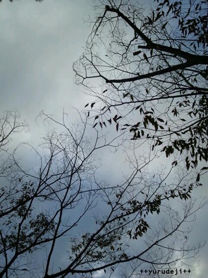 yurudeji_曇り空と木