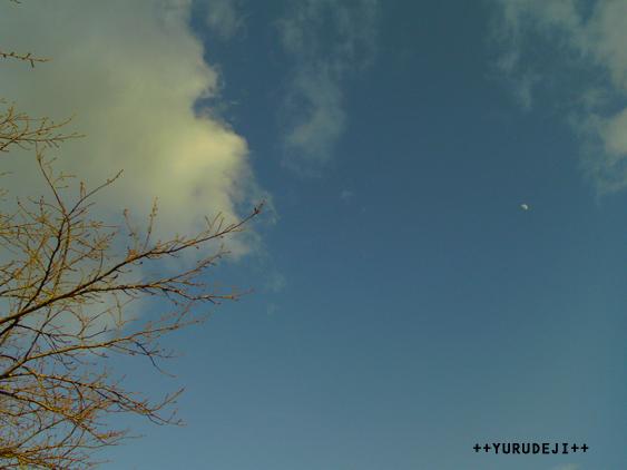 yurudeji_空と雲と木と月
