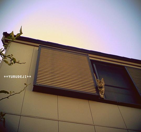 yurudeji_猫