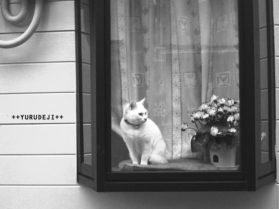 yurudeji_猫b