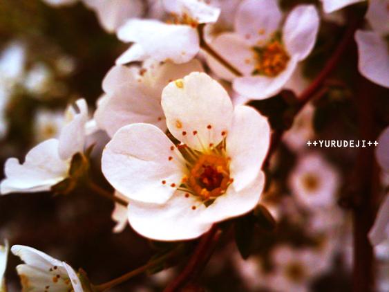 yurudeji_花c