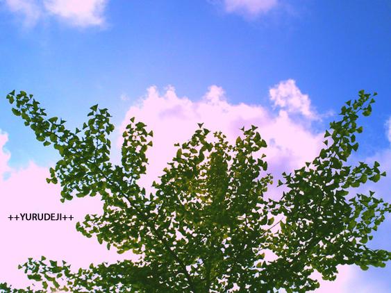 yurudeji_空と木