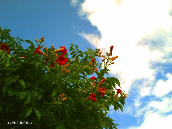 yurudeji_空と花