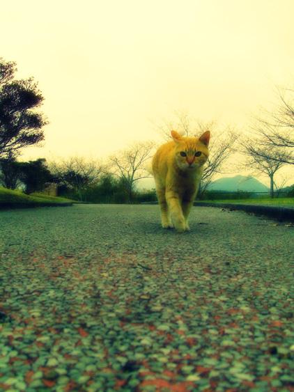 yurudeji_猫a