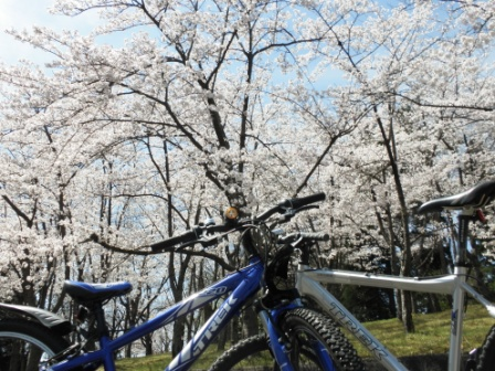 桜 MTB-1
