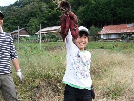 芋掘り体験-22