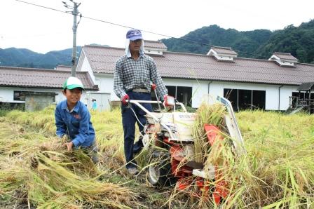 稲刈り体験-13