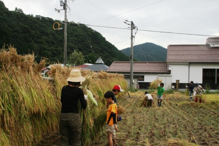 稲刈り体験-14