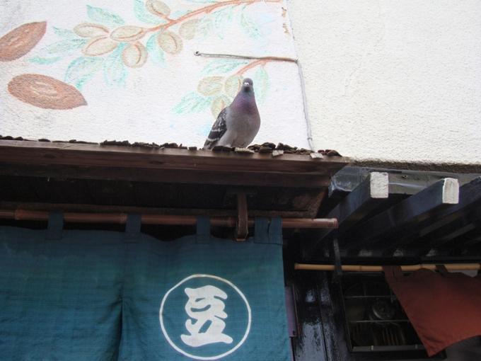 まめやに群がる鳩