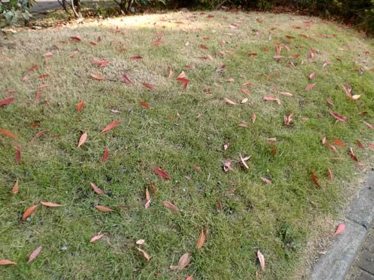 芝生と落ち葉2
