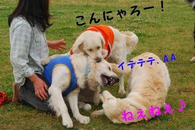 800_DSC_2032.jpg