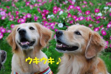 800_DSC_7661.jpg
