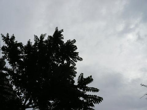 どんより梅雨空です。