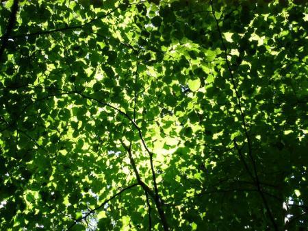 木漏れ日2_convert_20100723223959