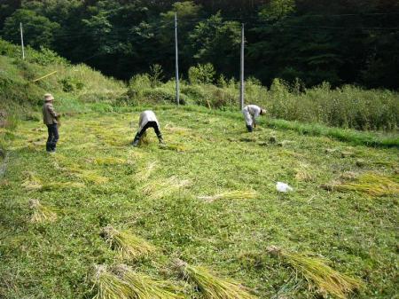 稲刈り2_convert_20101003221958
