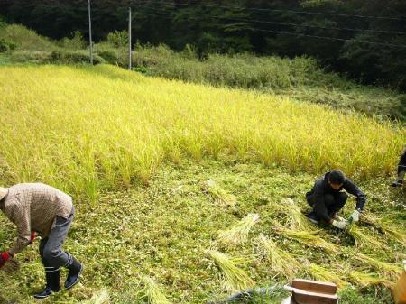 稲刈り1_convert_20101003221913
