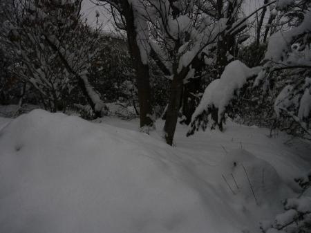 雪景色2_convert_20110212210515