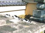 信長墓の猫