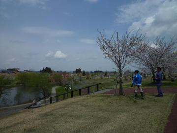 2011桜堤2