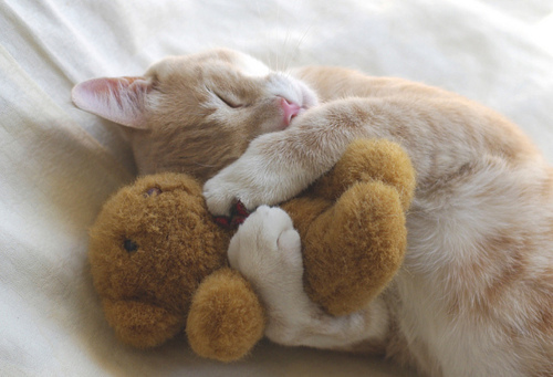 cat-teddy-hug1.jpg