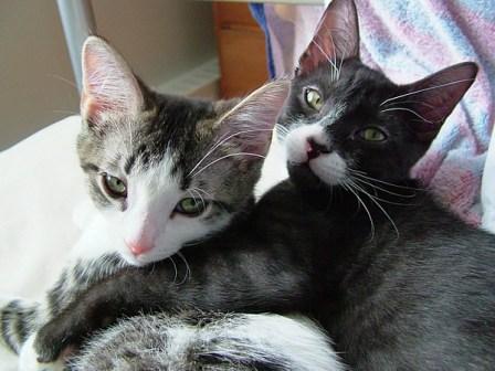 cat_hug-3.jpg