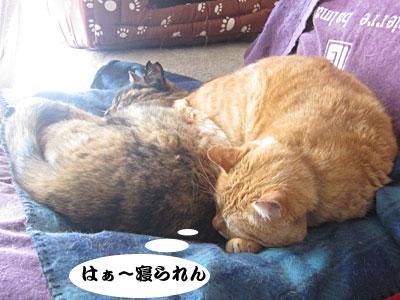 14_02_02_5.jpg