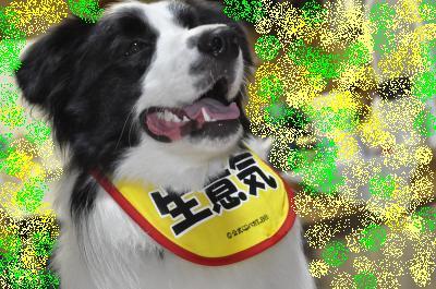 2011-04-10+195_convert_20110412114915-2.jpg