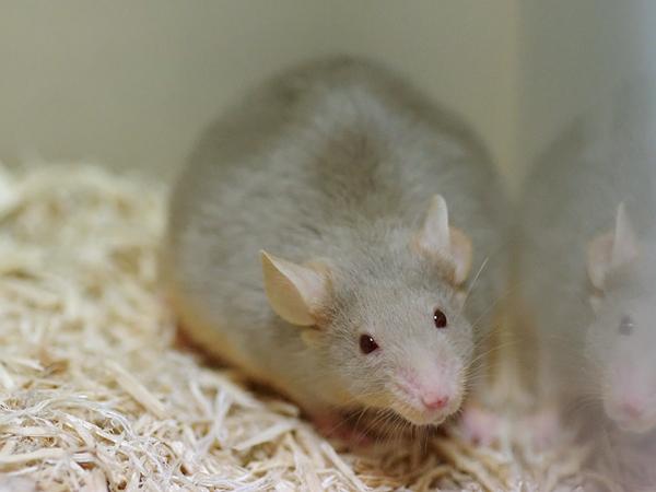 120723ファンシーマウス