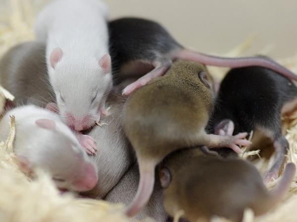 120120ファンシーマウス