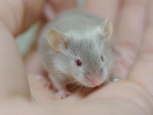 130114ファンシーマウス2