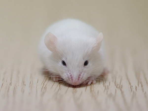 130215ファンシーマウス2