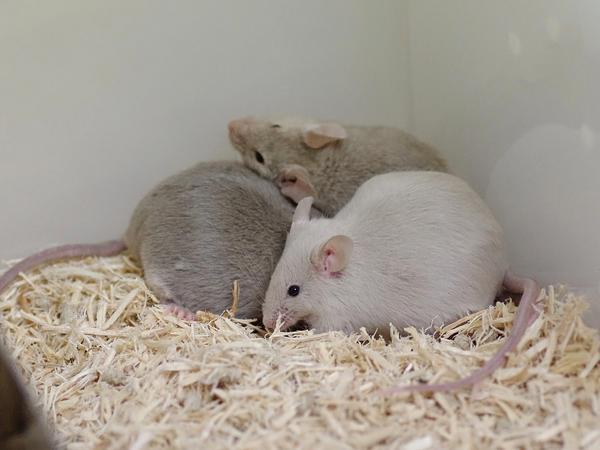 120503ファンシーマウス