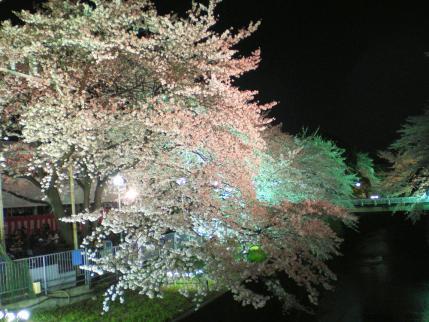 20100404-02.jpg