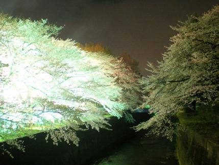 20100404-05.jpg