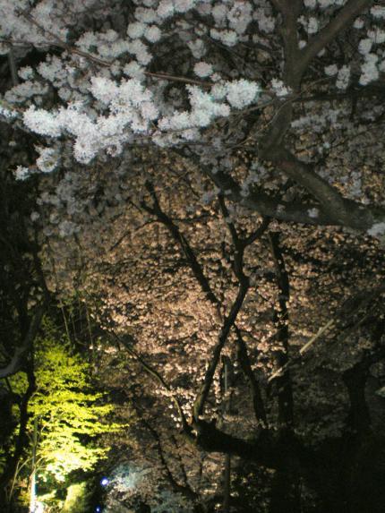 20100404-10.jpg