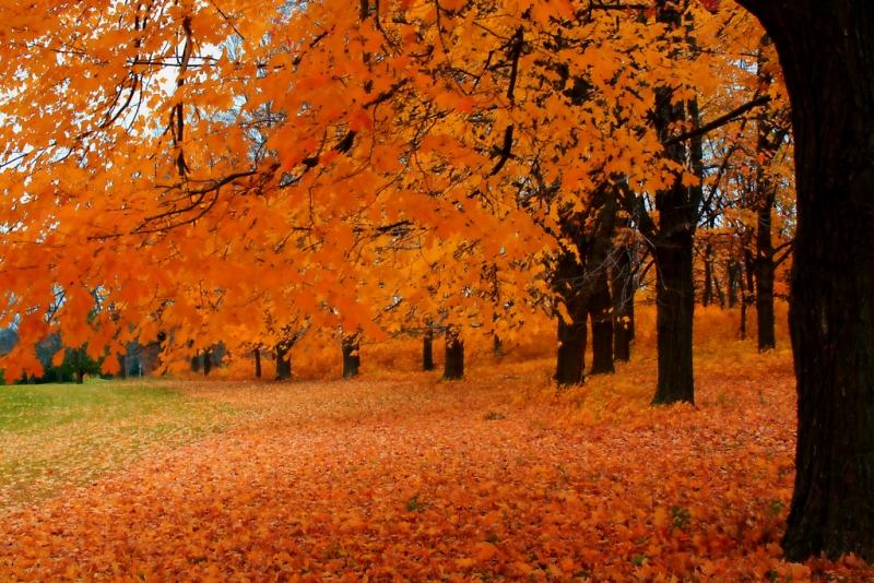 autumn-in-wisconsin14-11-16.jpg